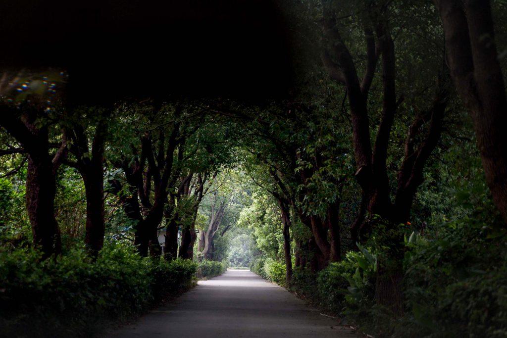 beautyfull tree avenue in China in Zhujiajiao, water city. Shalanaya Psytrance Festival in China.